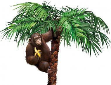 Brown monkey on palm tree