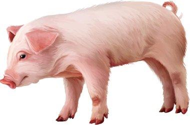 Little pink piglet