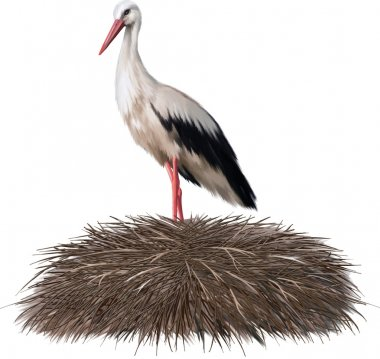 Adult stork standing in its nest. Spring