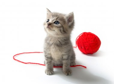 Cute tabby kitten with red ball of yarn