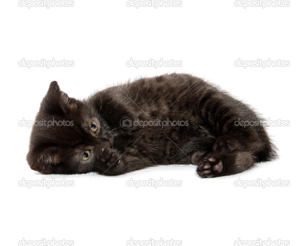 Cute Black Cats And Kittens Cute Black Cat Stock Photo C Eei Tony 20004879