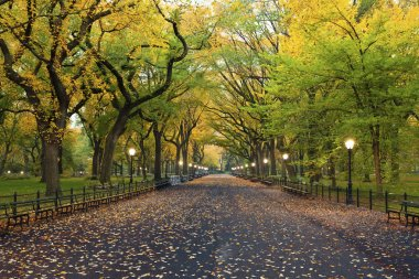 Image of The Mall area in Central Park, New York City, USA at autumn. stock vector