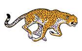 běžící gepard na bílém pozadí