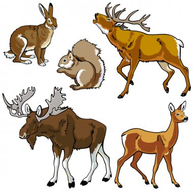 Set of animals,forest beasts,wild fauna,vector images isolated on white background,Eurasia herbivore mammals stock vector