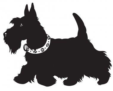 Scottish terrier black and white