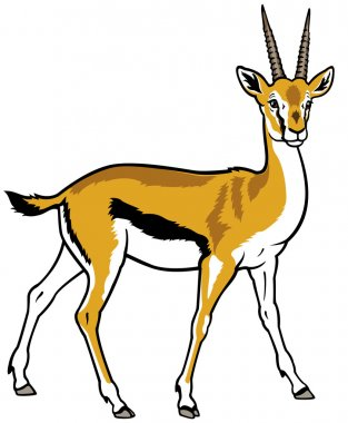 thomson gazelle