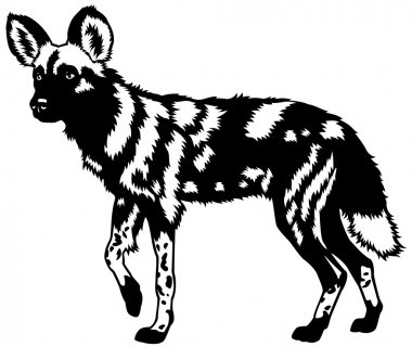 african wild dog black and white