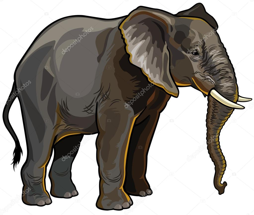 African elephant side view — Stock Vector © insima #31246351