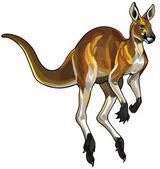 Fotografie Red kangaroo