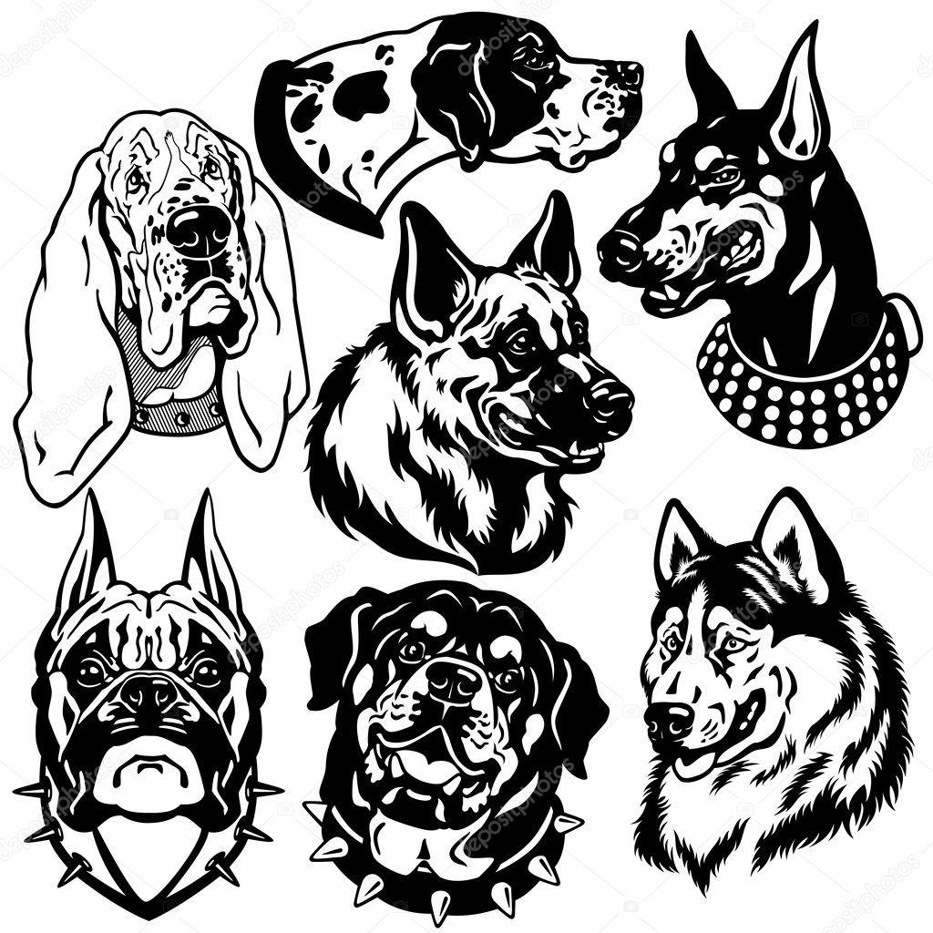Line Art Vs Sketch : Schwarz wei� set mit hunde kopf stockvektor