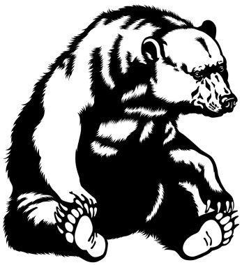 Bear black white
