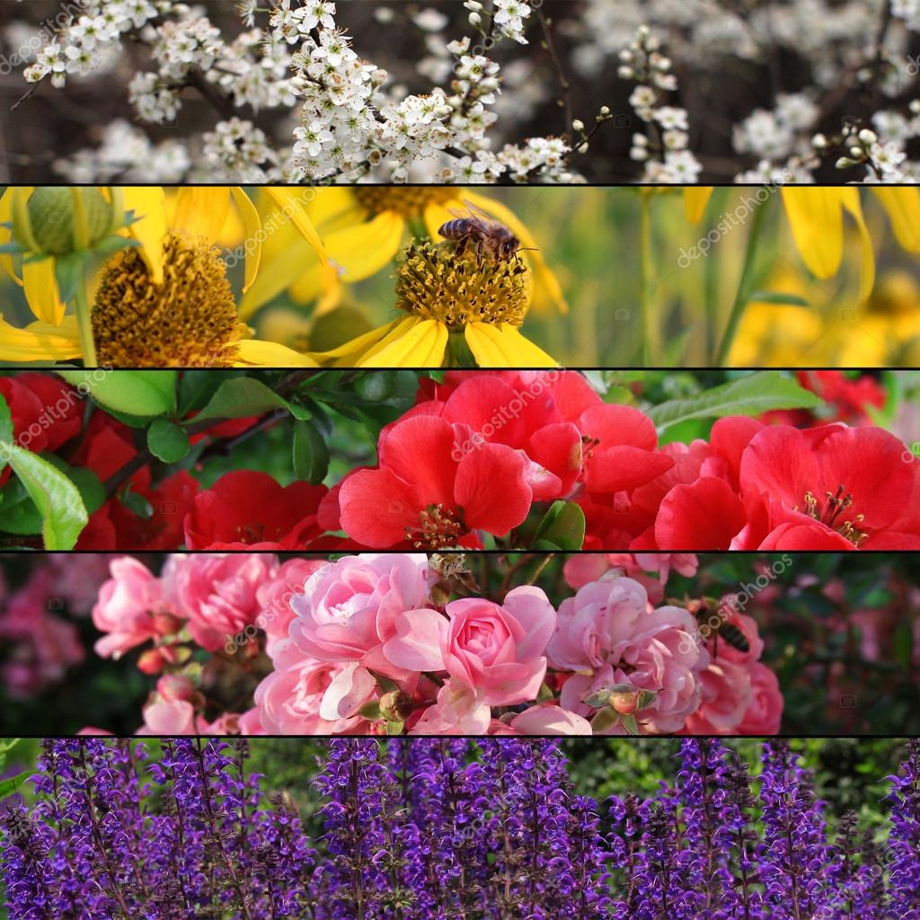 Collection of colorful flower banners or background