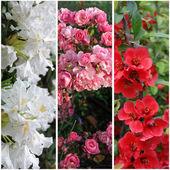 Fotografia raccolta di banner fiore: bianco, rosa e rosso