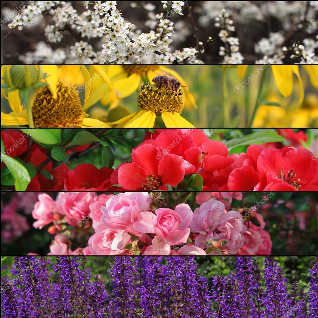 Set of beautiful flowers banners