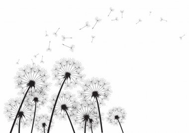 Black dandelions on white background