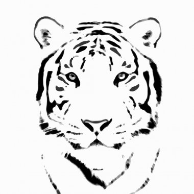 Bengal tiger sketch silhouette, isolated on white background.