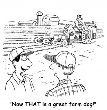 The farm dog is helping the farmer by driving the tractor