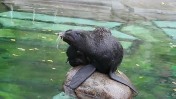 Robbe im Moskauer Zoo