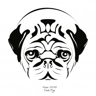 Black and white pug dog