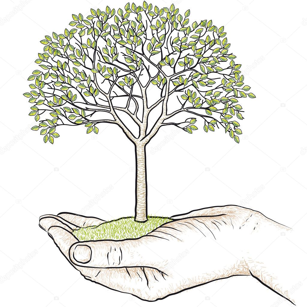 hand holding a tree