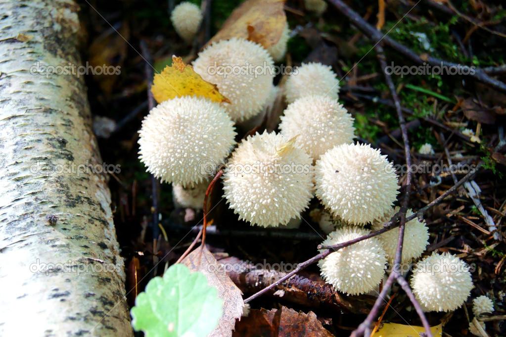 Strange fungi