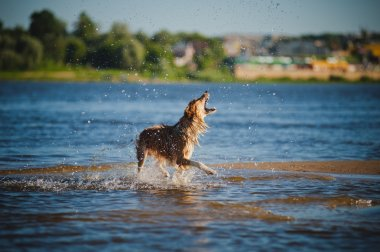 Dog catching water splashes