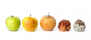 Five apples in various states of decay