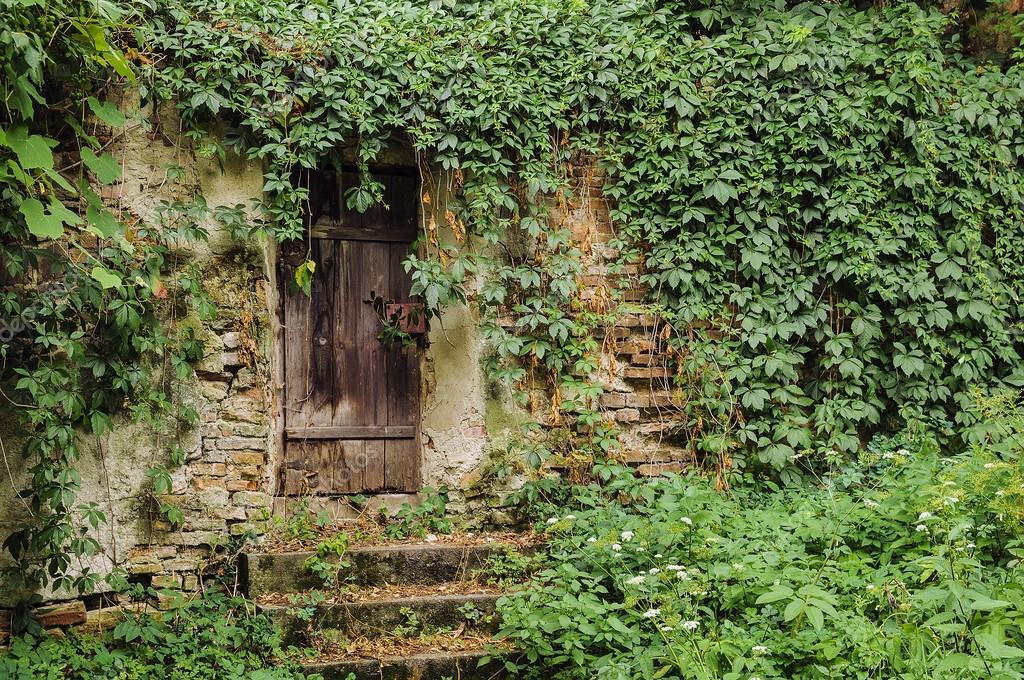 Tür Und Wand Eines Hauses Komplett Mit Efeu Bewachsen