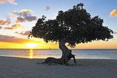Fotografia dividivi albero