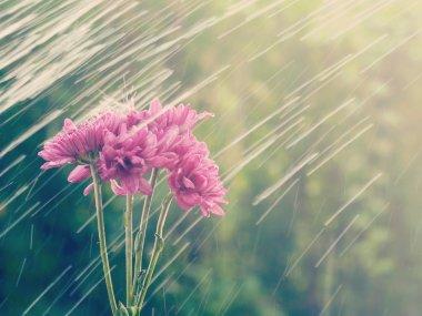 rain flowers  old retro vintage style