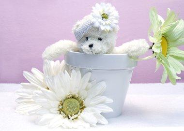 Teddy Bear inside Flower Pot