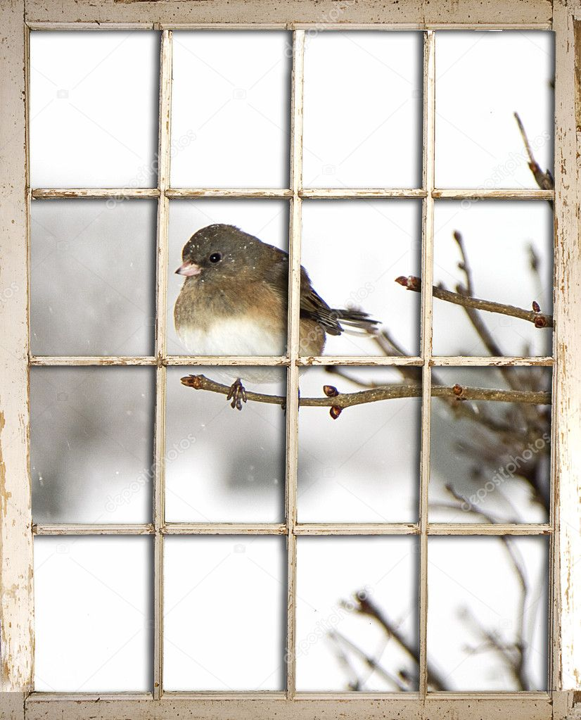 View of Bird Perched on Branch through Window