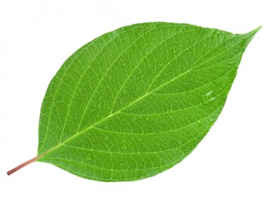 Green leaf on a white stock vector