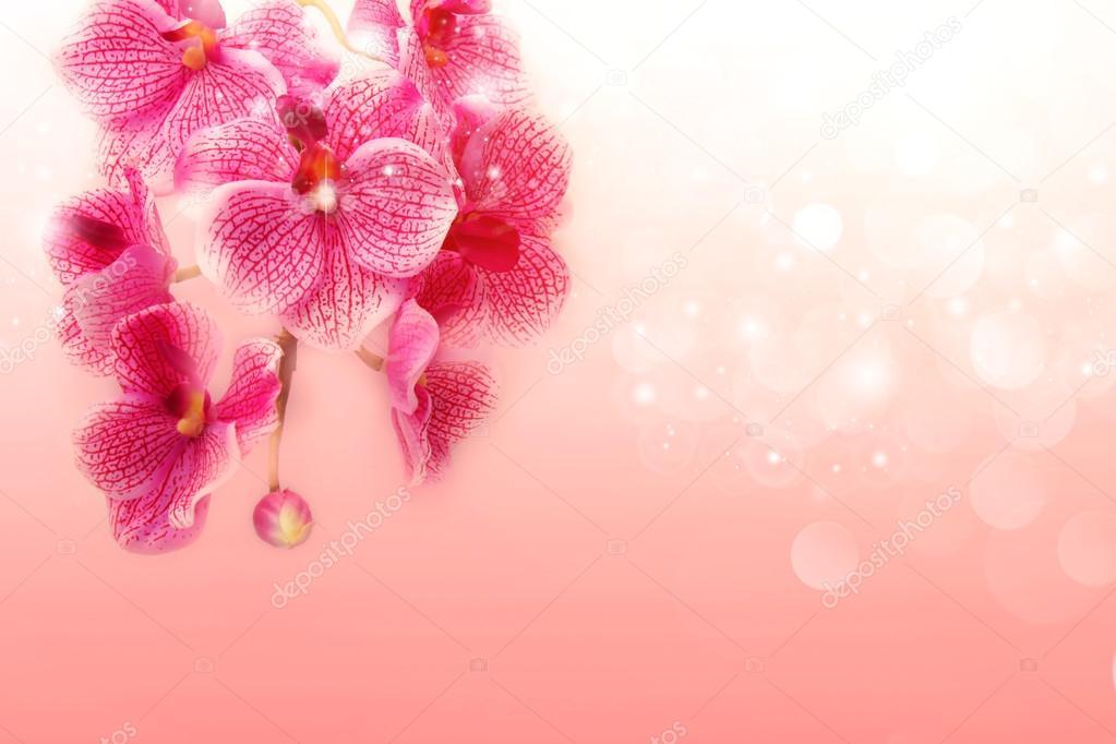 tender pink orchids on a soft orange background