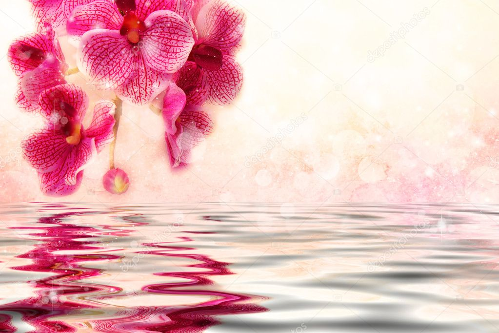 cute soft pink orchids over the water