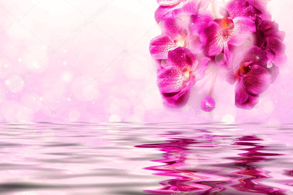 Lovely orchids over the water on a lilac background