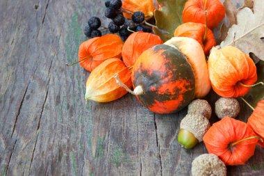Pumpkins, nuts, cape gooseberries. beautiful autumn still life