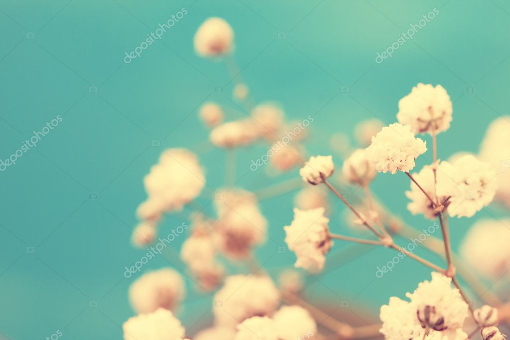 Vintage adorable small white flowers close up