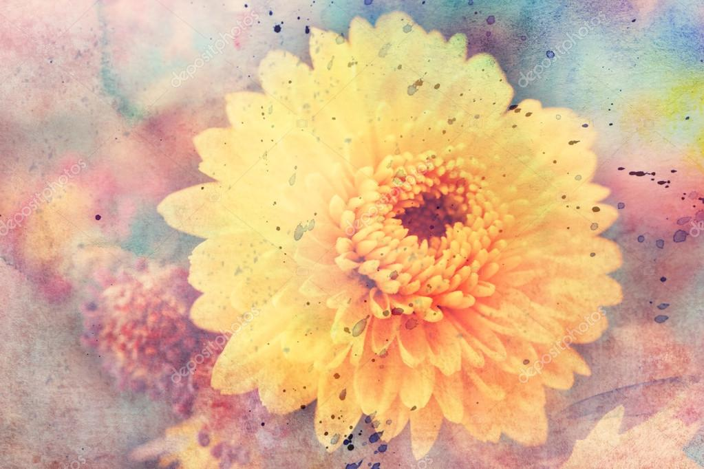 Artwork with yellow aster flower close up and watercolor splatter