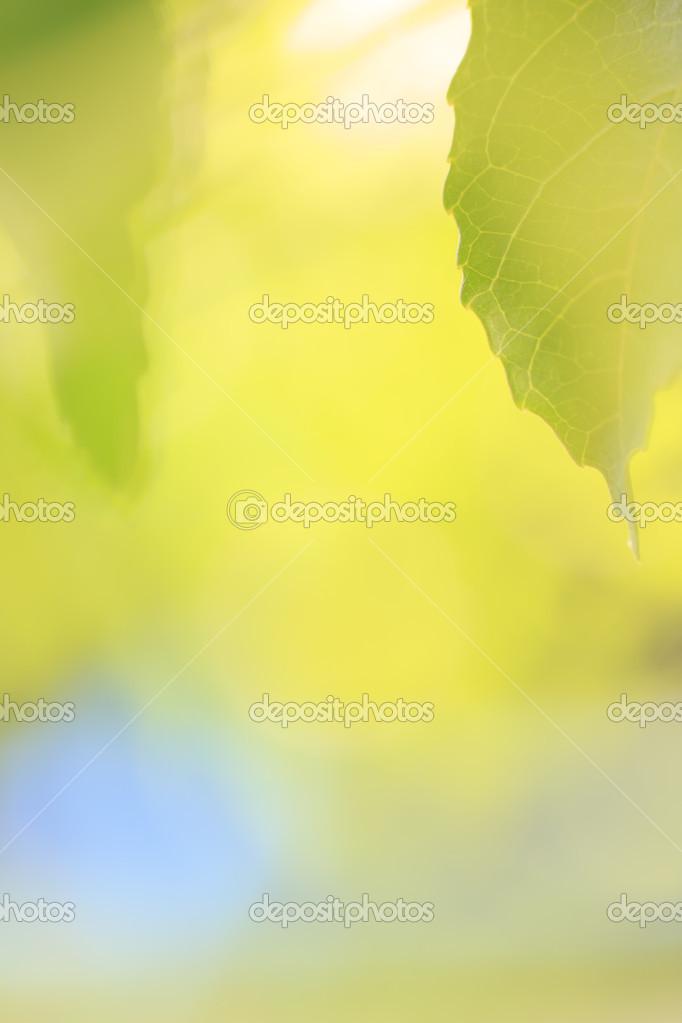 frontera de hojas de color verde primavera — Fotos de Stock ...