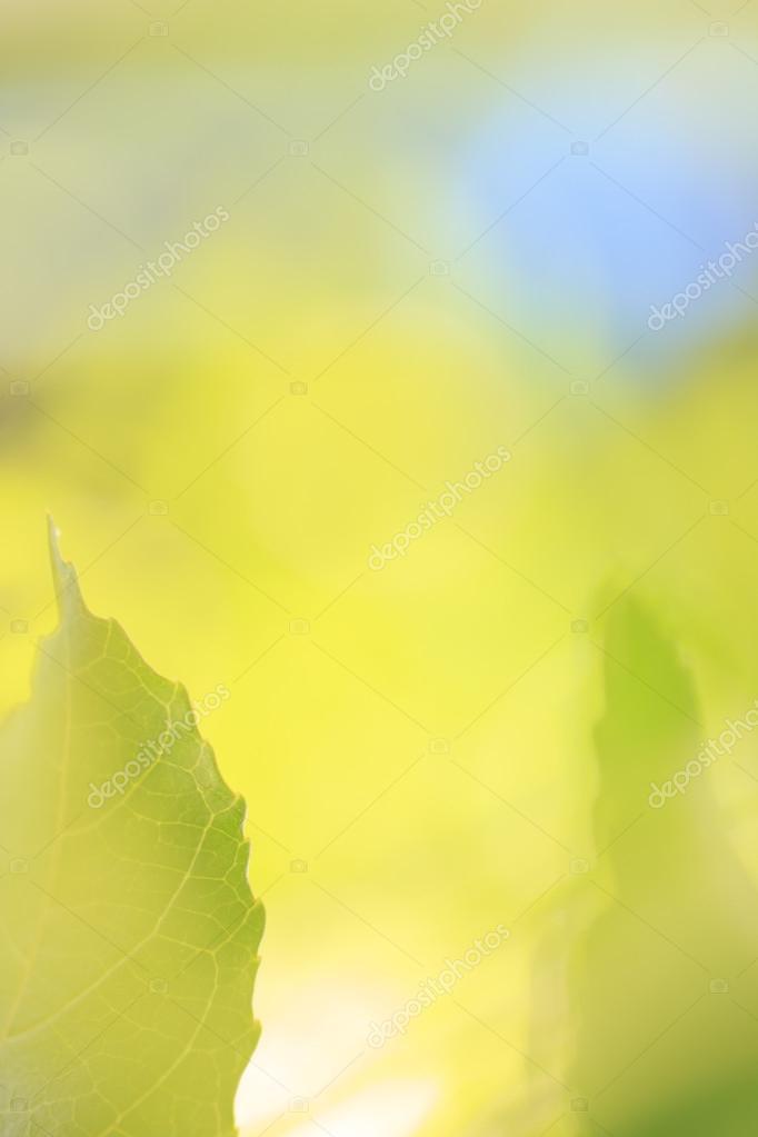 frontera de hojas de color verde primavera — Foto de stock ...