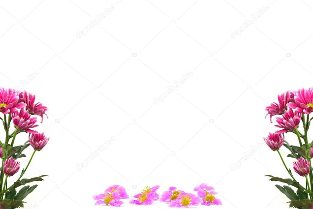 marco de flores de color púrpura ramas aislada sobre fondo blanco ...