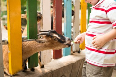 Close-up of a boys hand feeding a goat stock vector
