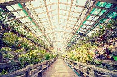Greenhouse interior