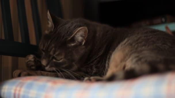 macska, takarítás magát, miközben az ágyban fekve