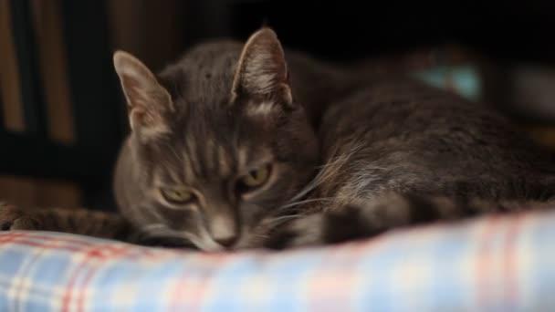 kočka čištění sám vleže v posteli