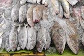selvatico catturato il pesce fresco a un mercato, Thailandia