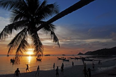 Palm tree over lagoon with boats at sunset. Koh Tao island, Thai