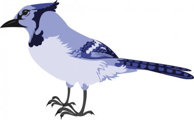 Profile of a Bluejay