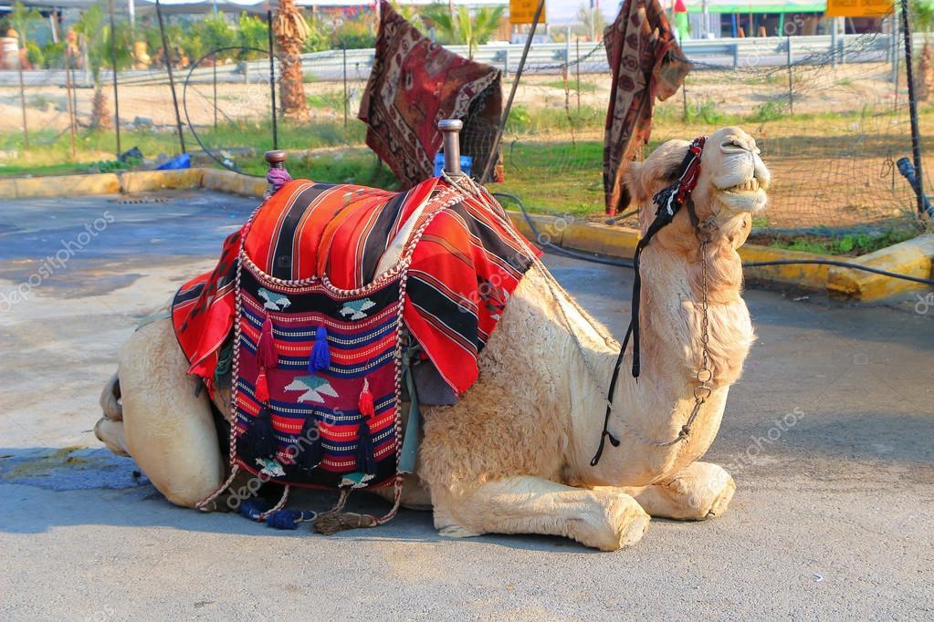 Секс бедуин